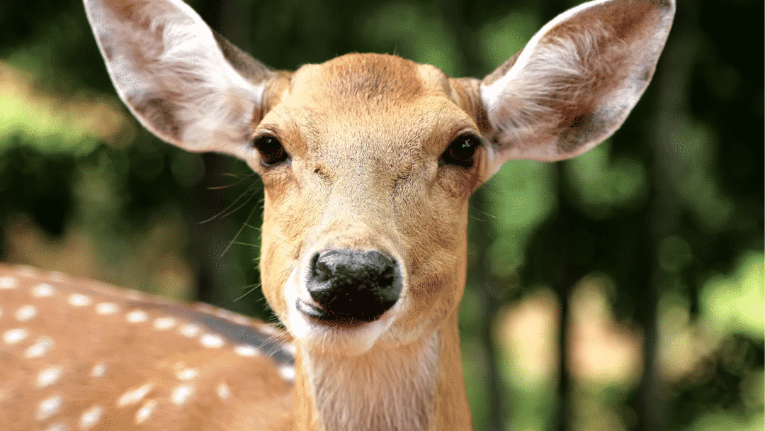 What A Cute Video Of A Deer Can Teach Us About Video Marketing!